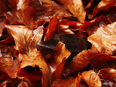 Tips for Fall Landscaping