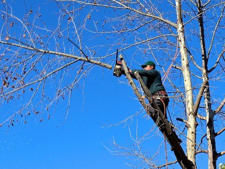 Can a Lawn Care Service Remove Trees?