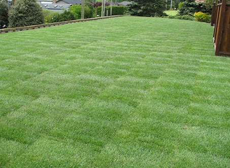 Which Grass is Best for You?