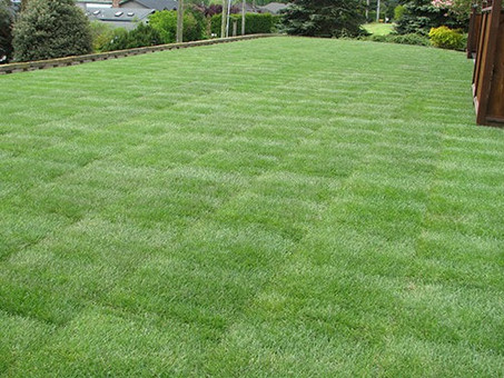 Should I Use a Lawn Service for My Yard?