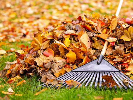 Top 5 Fall Lawn Care Tips