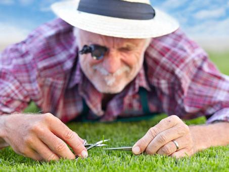 Spring Lawn Care: It Takes More than a Fertilizer