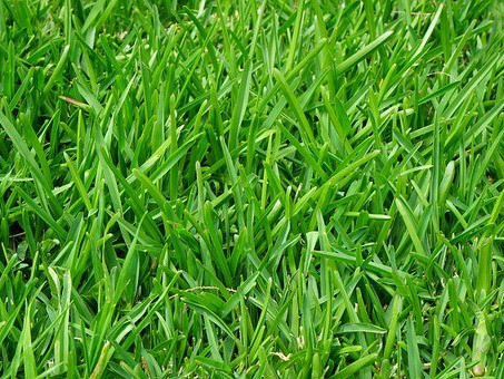 What lawn care services are offered during winter?