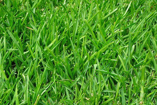 Lawn Service Charlotte