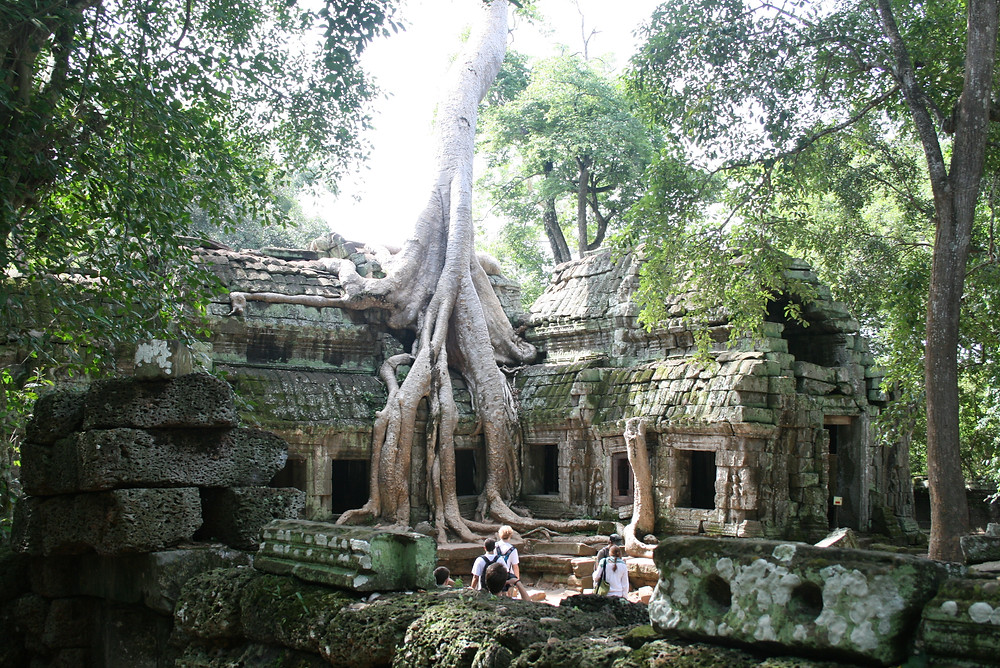 heritage site, roots, tree house, tree bathing, forest