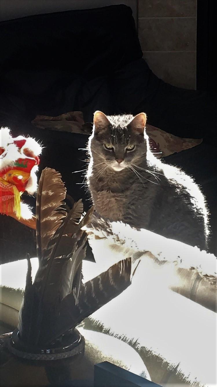 Spirit Animal, cat, energy medicine, qi gong, message