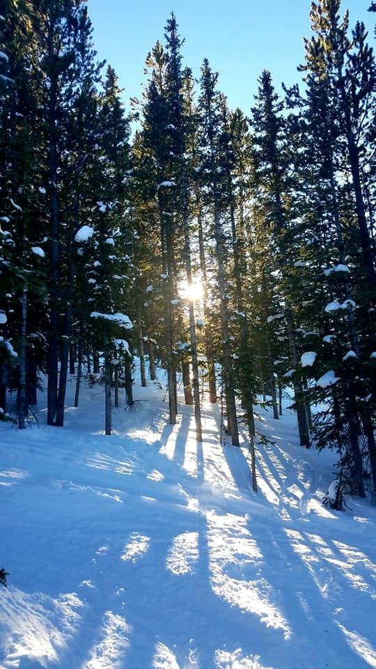 conifer tree healing, tree healing