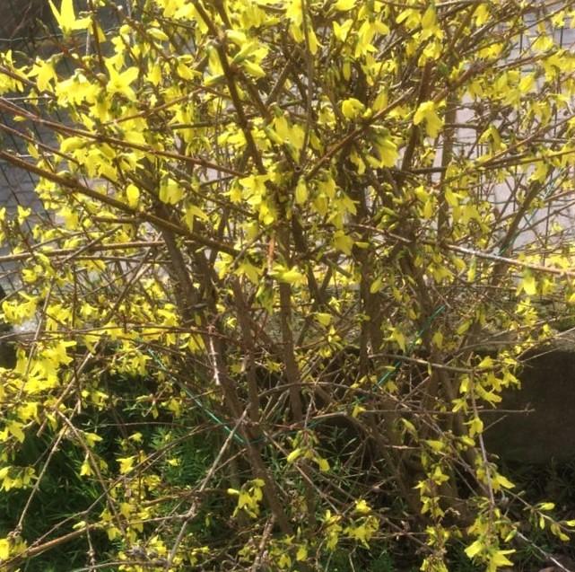Primavera di Luciana