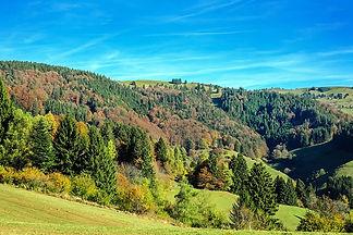 glückwärts, Schwarzwald, Urlaubsseminar, Stresskompetenz, Naturverbindung, Achtsamkeit