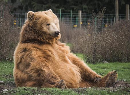 Was wir von Balu dem Bären lernen können