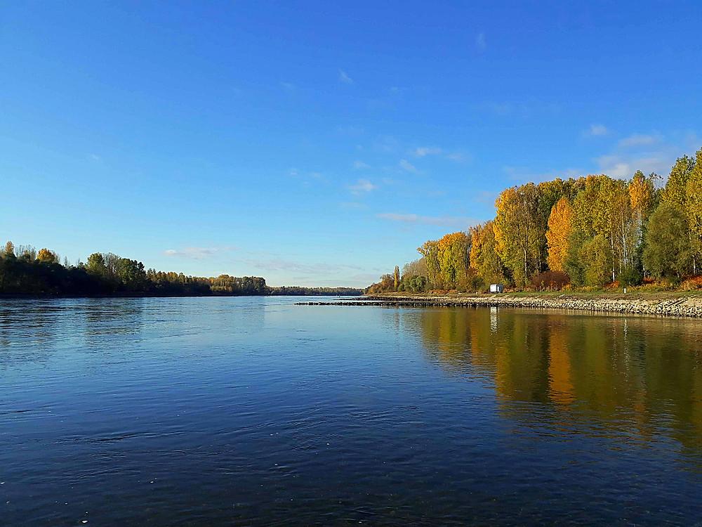 Pfalz, am Rhein