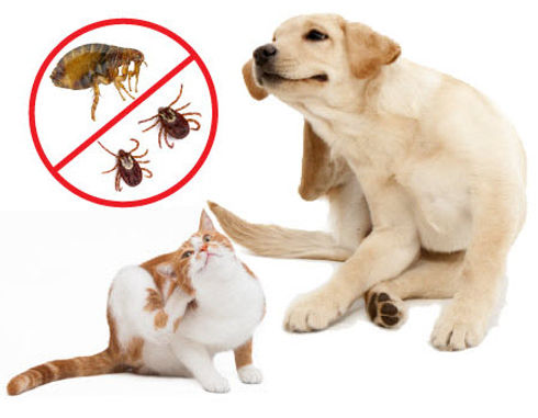 fleas-and-ticks-on-dogs-and-cats.jpg