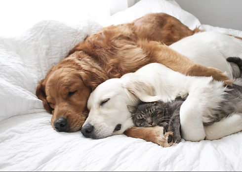 sleeping pups and cat.png