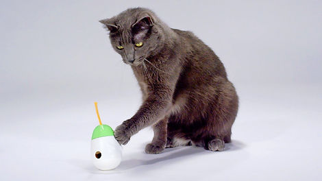 cat with toy.jpg