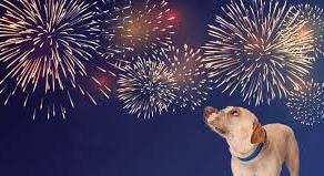 Furry Friends & Fireworks