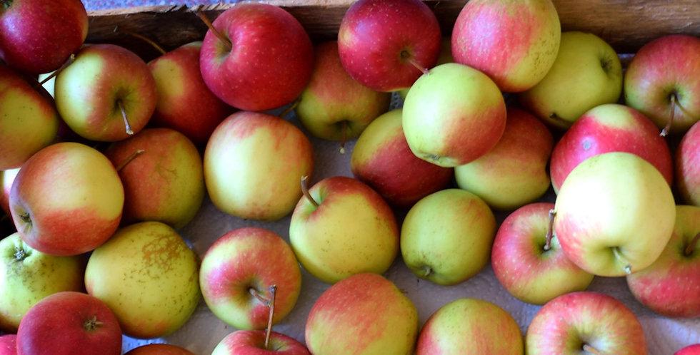 Äpfel 1 kg