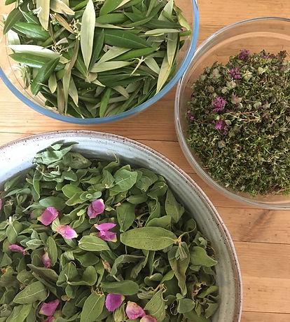 olive leaf cistus thyme.JPG