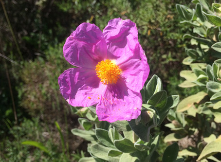 More wild herbs for respiratory health
