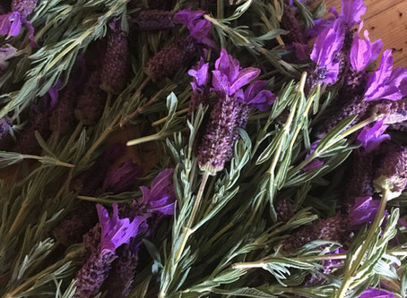 Nervines: herbs for stress, anxiety and overwhelm