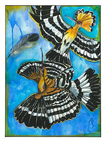 Hoopoe birds