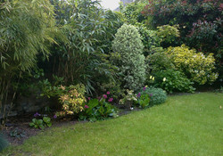 The back garden mixed border