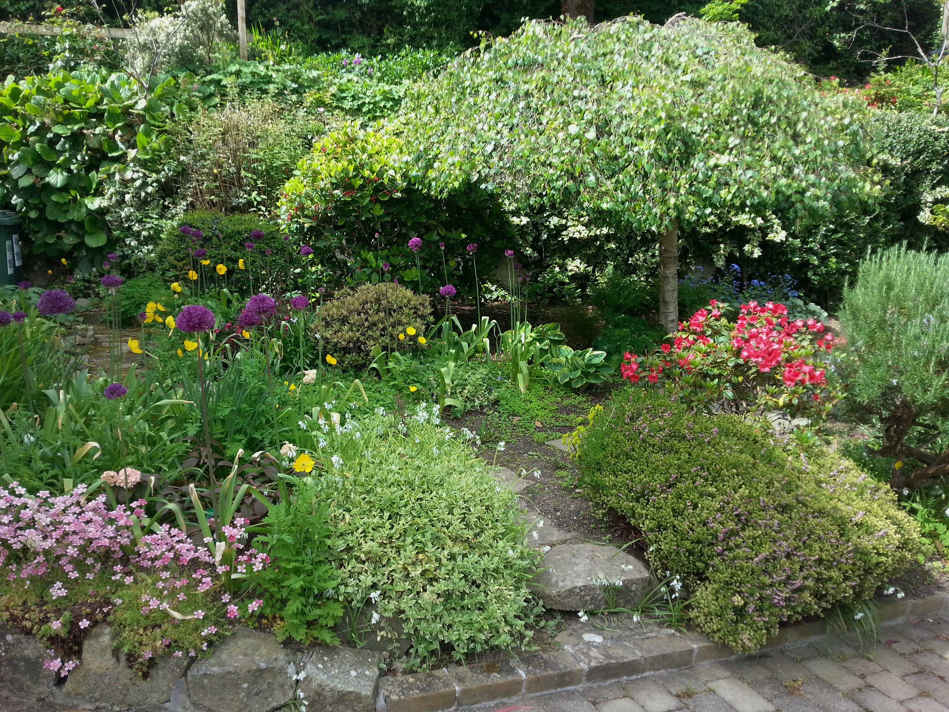 Mature suburban garden, Carrickmines