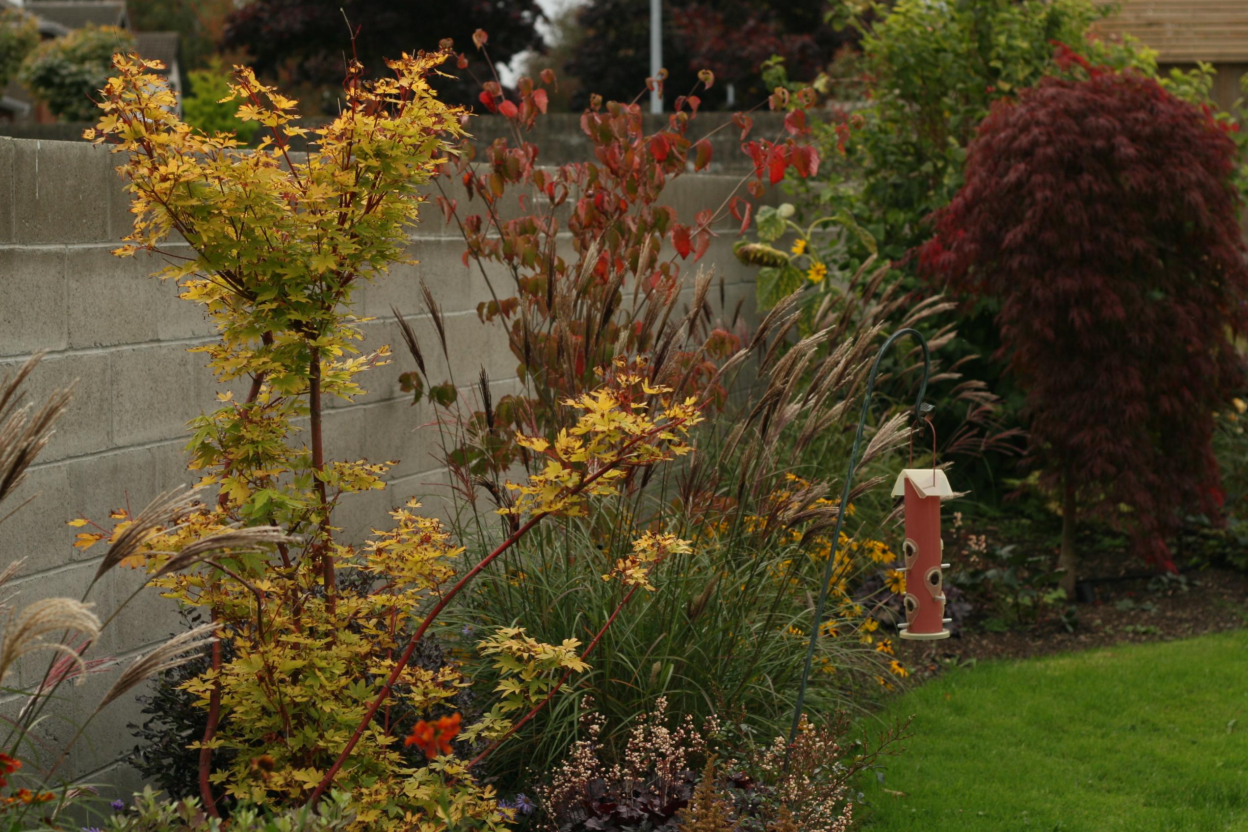 Naturalistic Garden, Castlenock
