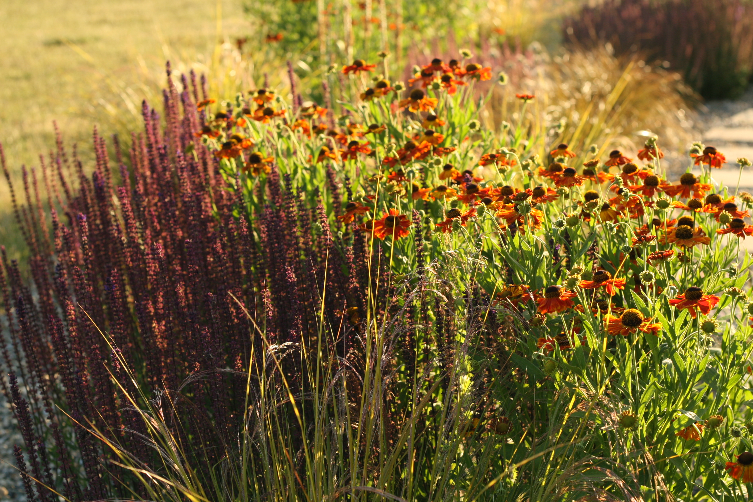 Gravel garden, Celbridge
