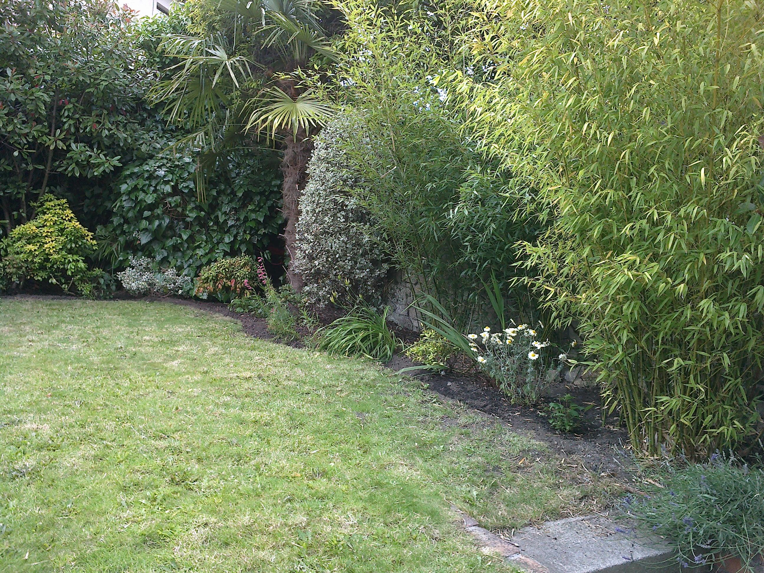 Back garden border