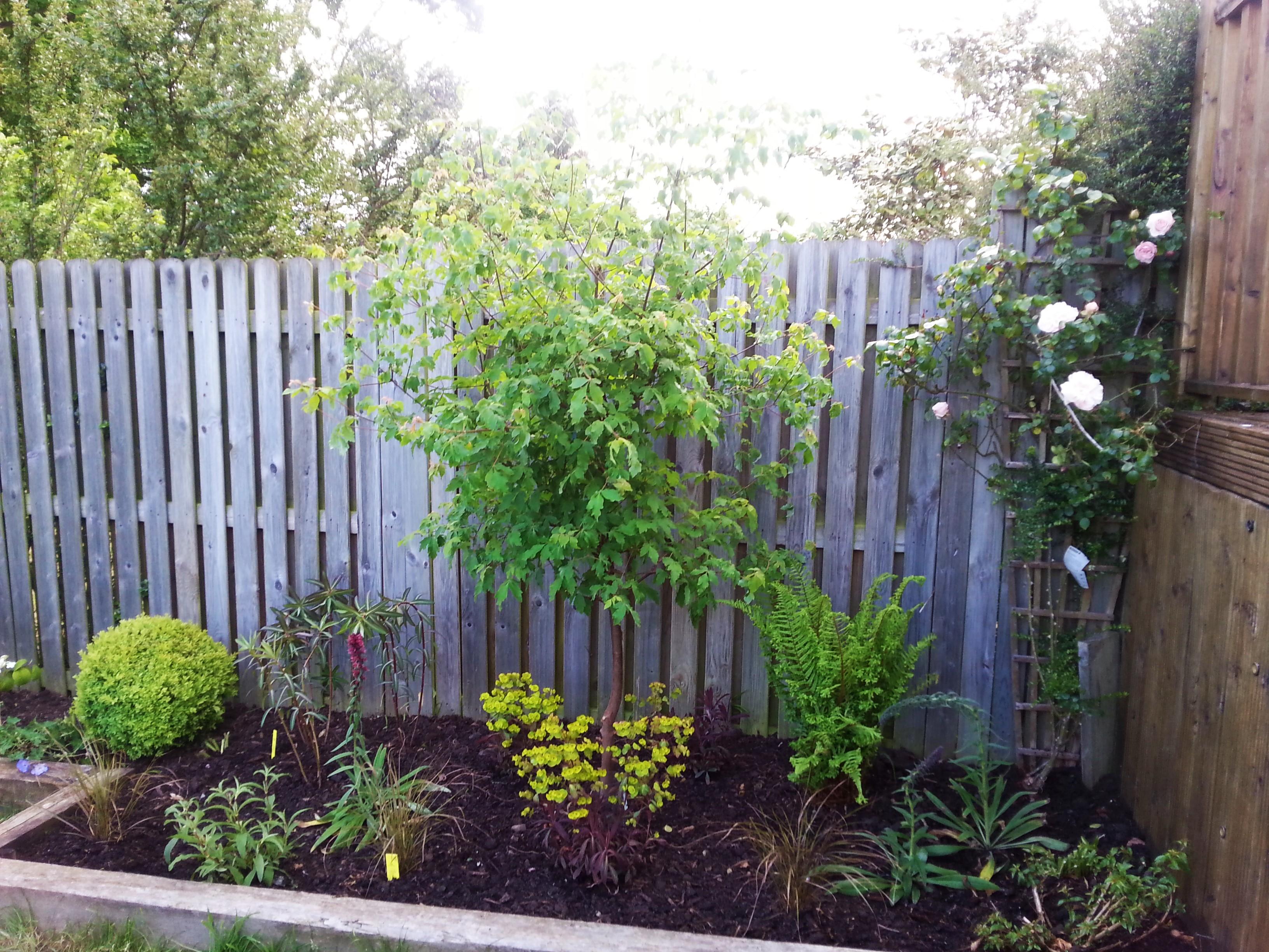 Urban garden borders, Mount Merrion