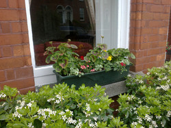 The front garden window box and choisya