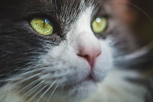 cat-eyes-photo.jpg