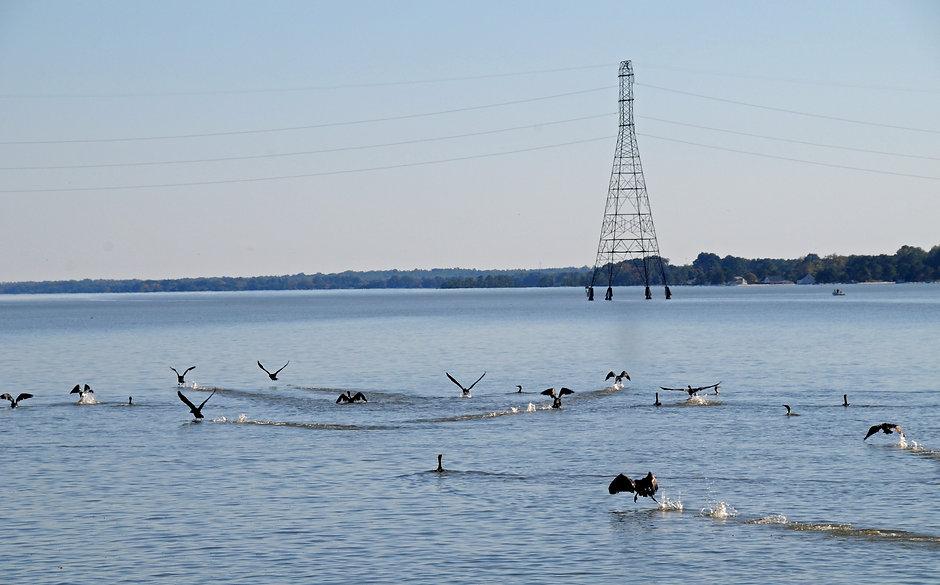 Cormorants on the Rappahannock River, Tappahannock, Virginia