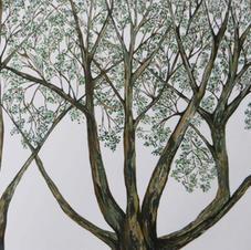 Raconte-moi un arbre, 2013
