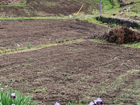 蕎麦の種蒔き
