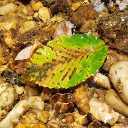 leaf water.jpg