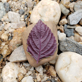 leaf rock.jpg