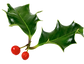 Christmas%2520Holly_edited_edited.png