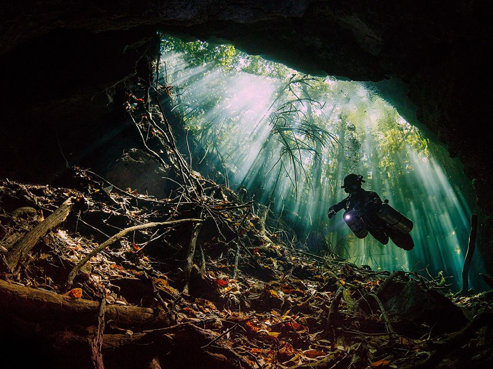 mexico-mangroves-cenote-diving_86767_990