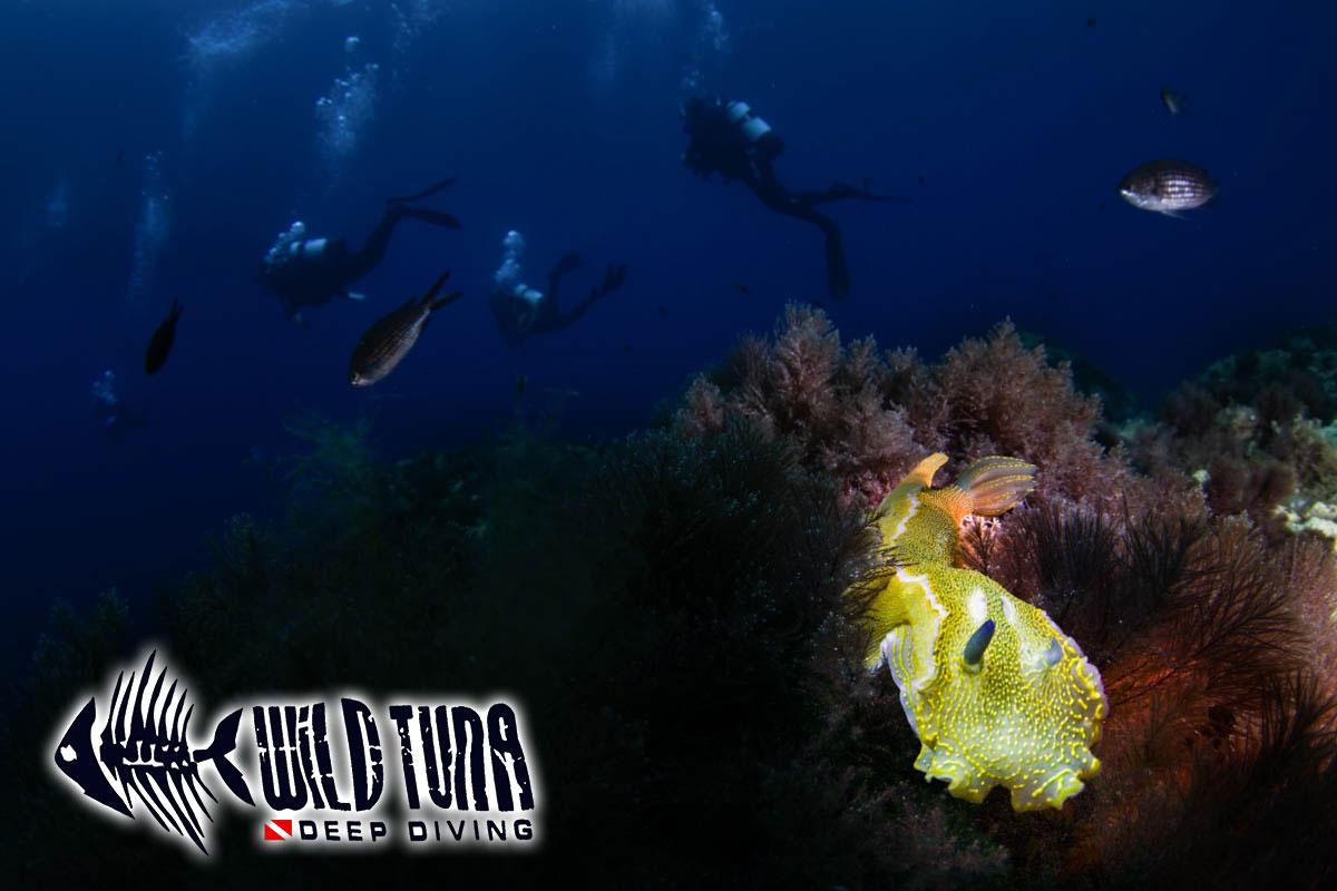 diving lampeduda foto sub