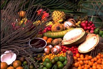 Frutos da Amazônia