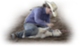 Goat-Tying-RodeoHS.png