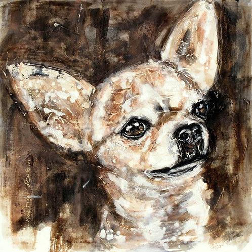 Chihuahua Head Study