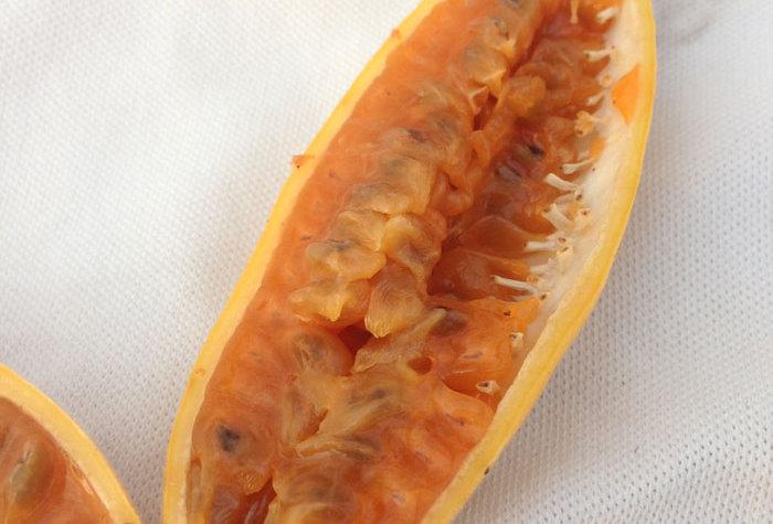 Bananen Passionsfrucht (Passiflora mollissima)