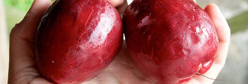 Malay Apfel ( Syzygium malaccense)