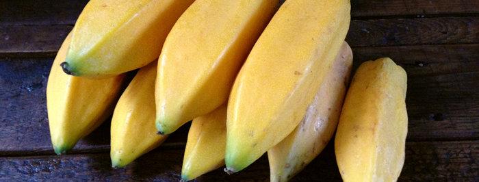 Früchte von Babaco (Carica pentagona)