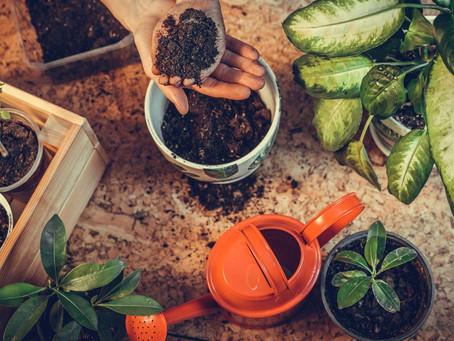 Solo bem nutrido: A chave para um jardim sempre belo e a certeza de plantas saudáveis.