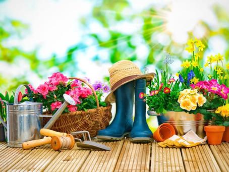 Verão no jardim, o que cultivar e como manter vossas plantas saudáveis nessa estação.