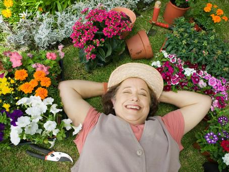 Saúde das Plantas, como manter as suas verdinhas sempre maravilhosas sem stress.
