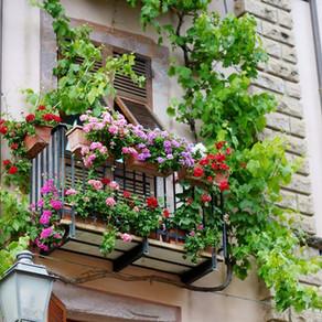 Cultivos de ervas, flores e hortaliças em floreiras e canteiros elevados.
